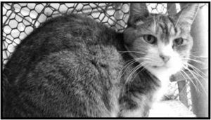 Denise the cat