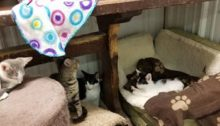 Rescued Felines in Need