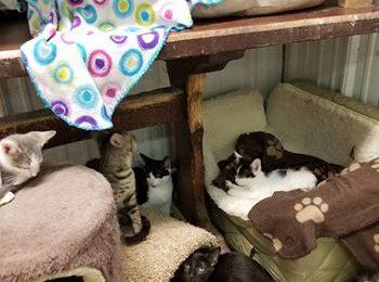 Rescued Felines in Need