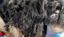 black-matted-dog