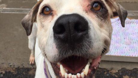 Hillside SPCA, Inc  | A truly unique animal shelter